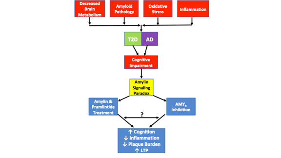 Amylin Signaling in Diabetes and Alzheimer's Disease
